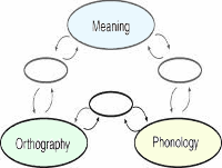 Triangle Modelof Reading