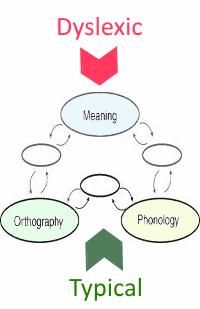 diagram dyslexic path to reading